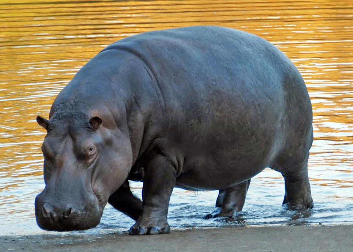 Animales En Peligro De Extinción: Estos 10 Animales